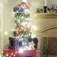 What to do with all those extra Amazon boxes #jbjjewelrybyjamie #magiccitykitties #christmasdecor #lifewithcats #diyprojects #diycattree #upcycle #recycle #boxtree